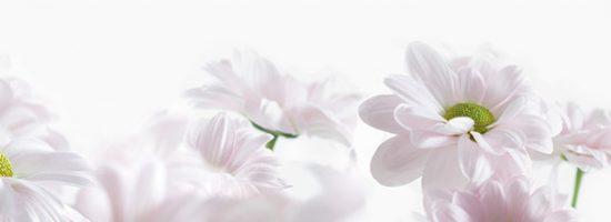 Dekor Blumen